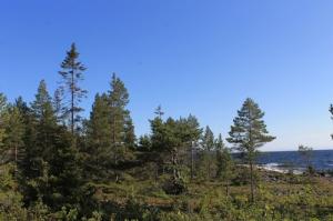 Лес - краткая инструкция по применению
