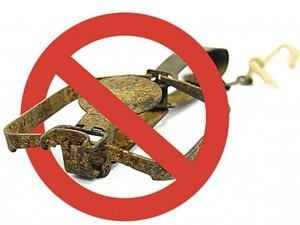 Административная ответственность за осуществление охоты с помощью стандартного ногозахватывающего удерживающегокапканасо стальными дугами