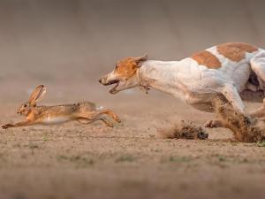 Ограничены контактные способы тренировки охотничьих собак